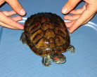 Caring For Turtles