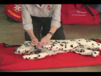 How to Perform CPR on a Dog