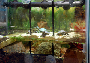 Pet Turtle Aquarium